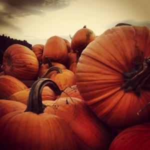 Pile of Pumpkns