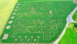 Bob's corn maze
