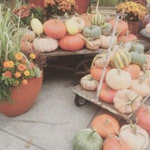 U Village Pumpkins